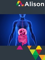 Introduction to the Human Digestive System Alison Course GLOBAL - Digital Certificate