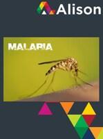 Global Health Initiative - Malaria Awareness Alison Course GLOBAL - Digital Certificate