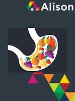 Human Nutrition - Understanding Macronutrient Metabolism Alison Course GLOBAL - Digital Certificate