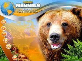 Wildlife Creative Studio Steam Key GLOBAL