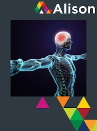 Introduction to the Human Nervous System Alison Course GLOBAL - Digital Certificate