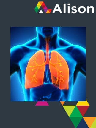 Introduction to the Human Respiratory System Alison Course GLOBAL - Digital Certificate - capa