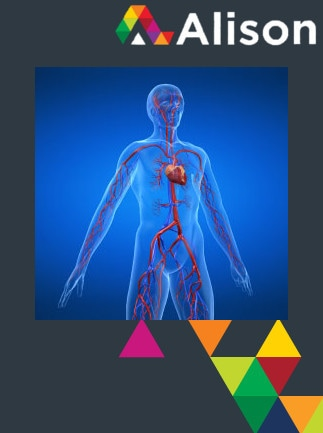 Introduction to the Cardiovascular System Alison Course GLOBAL - Digital Certificate - capa