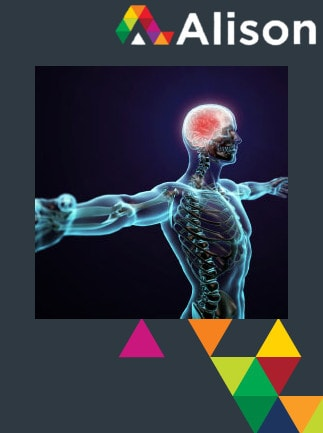 Introduction to the Human Nervous System Alison Course GLOBAL - Digital Certificate - capa