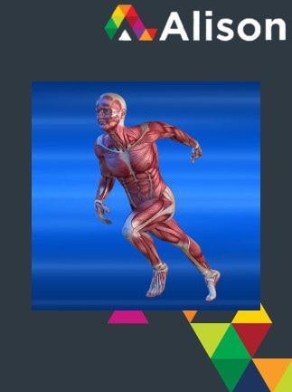 Introduction to the Human Muscular System Alison Course - Digital Certificate - capa